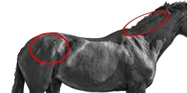 Free2Run Glada Hästen