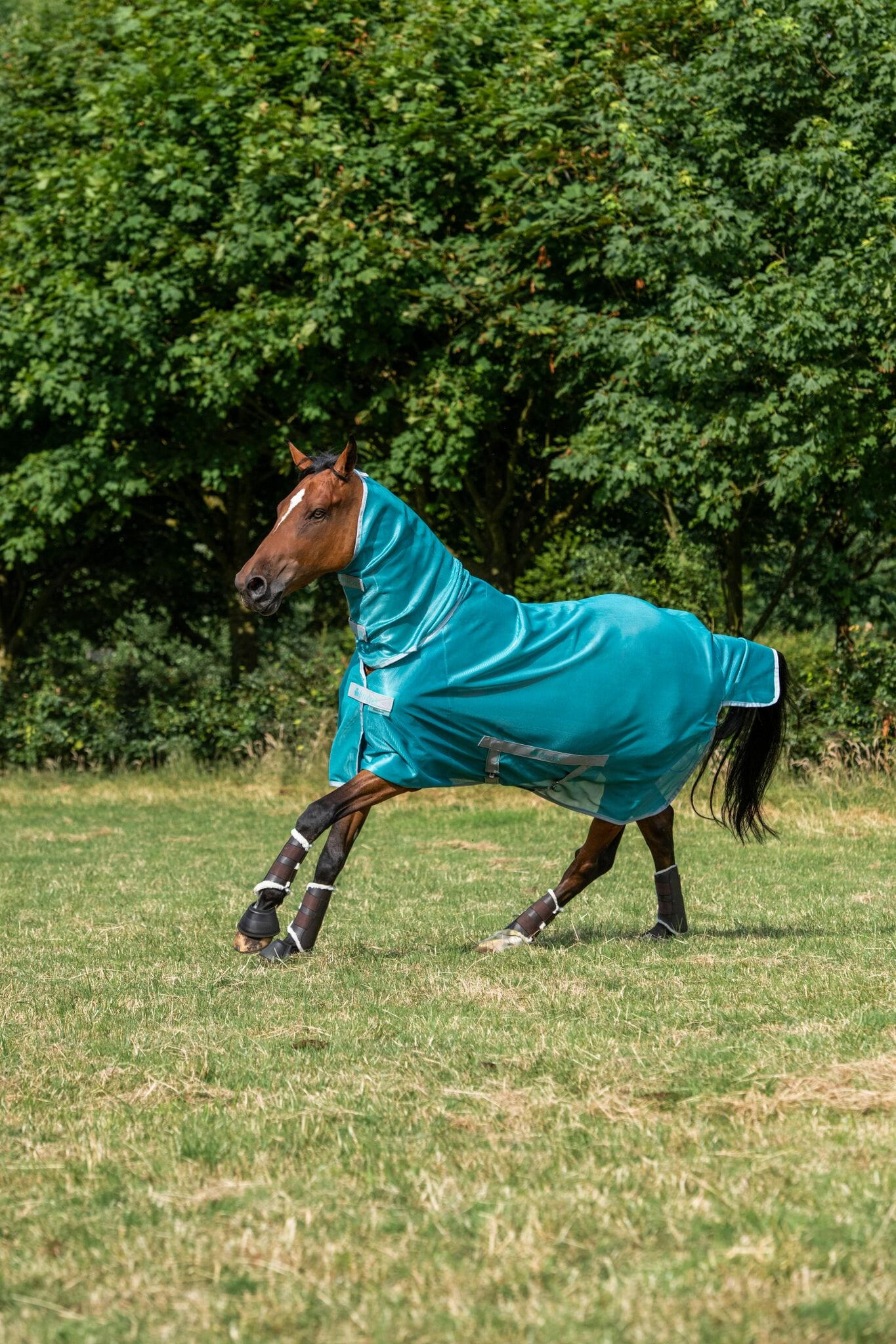 Freedom Fly Sheet Full Neck - Turquoise
