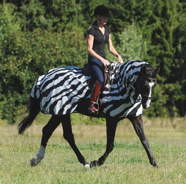 Buzz-Off Riding, Zebra