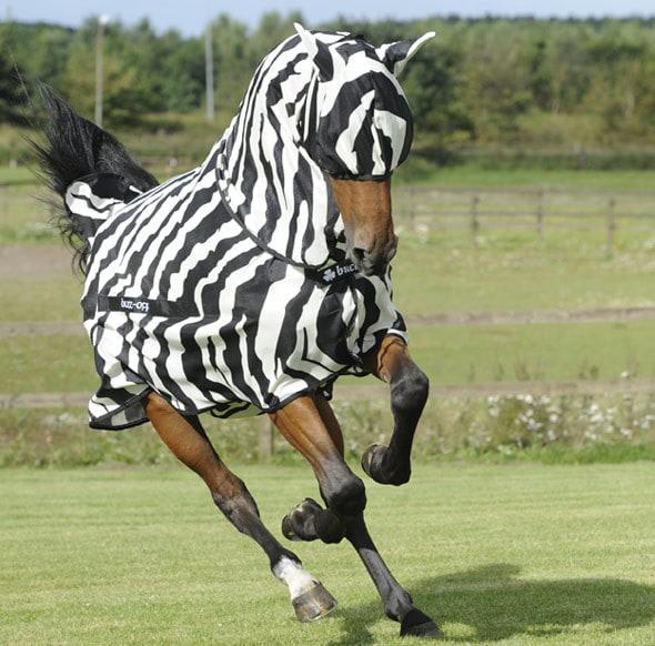 Fly rug Full Neck Zebra