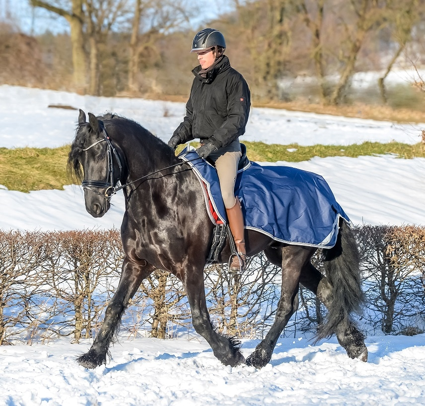 bucas-riding-rug