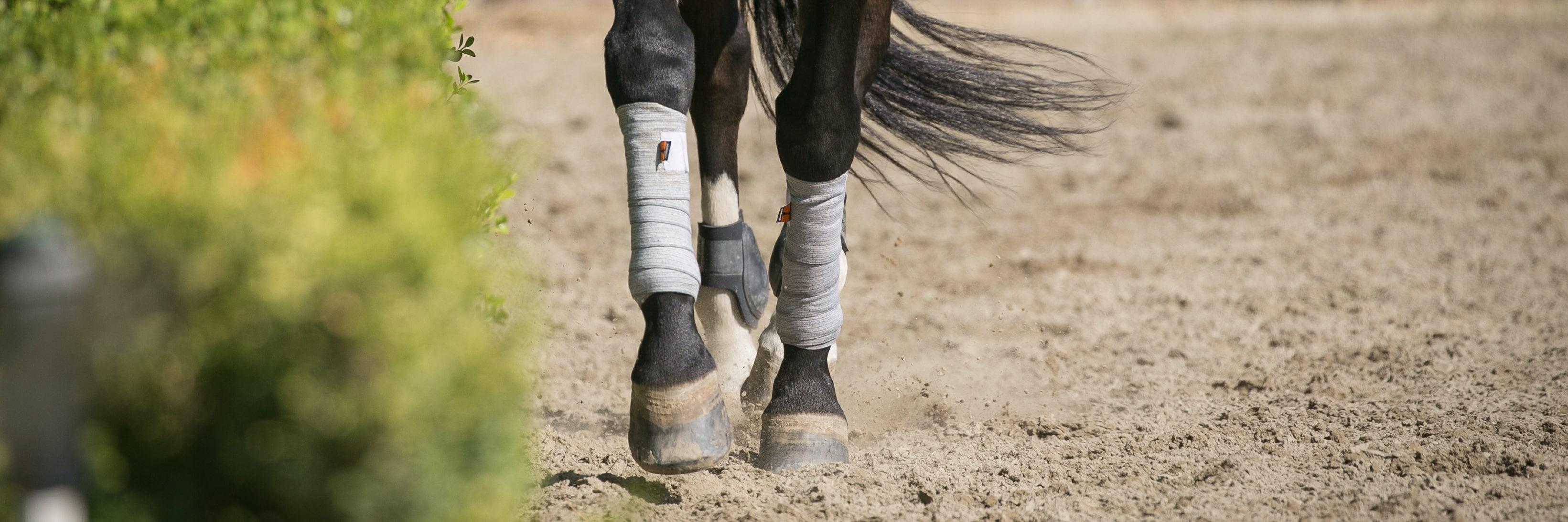 Hur skyddar jag hästens ben bäst?