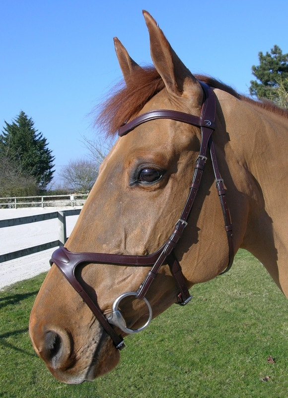 X-fit anatomical bridle S/S - Brown/Full