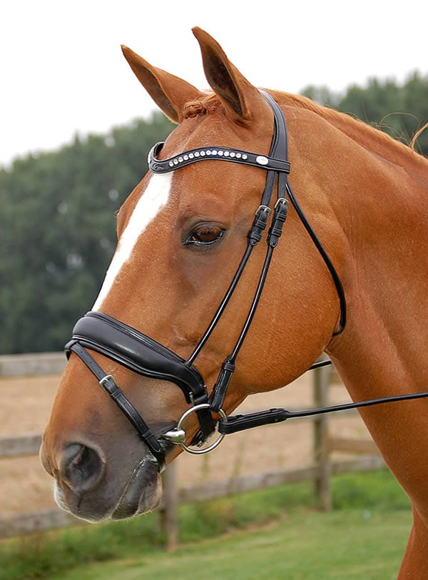 Rolled leather bridle