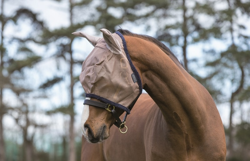amigo-flughuva-oron-horseware
