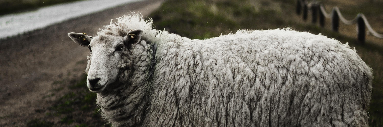 Woolpad - läkande och vårdande